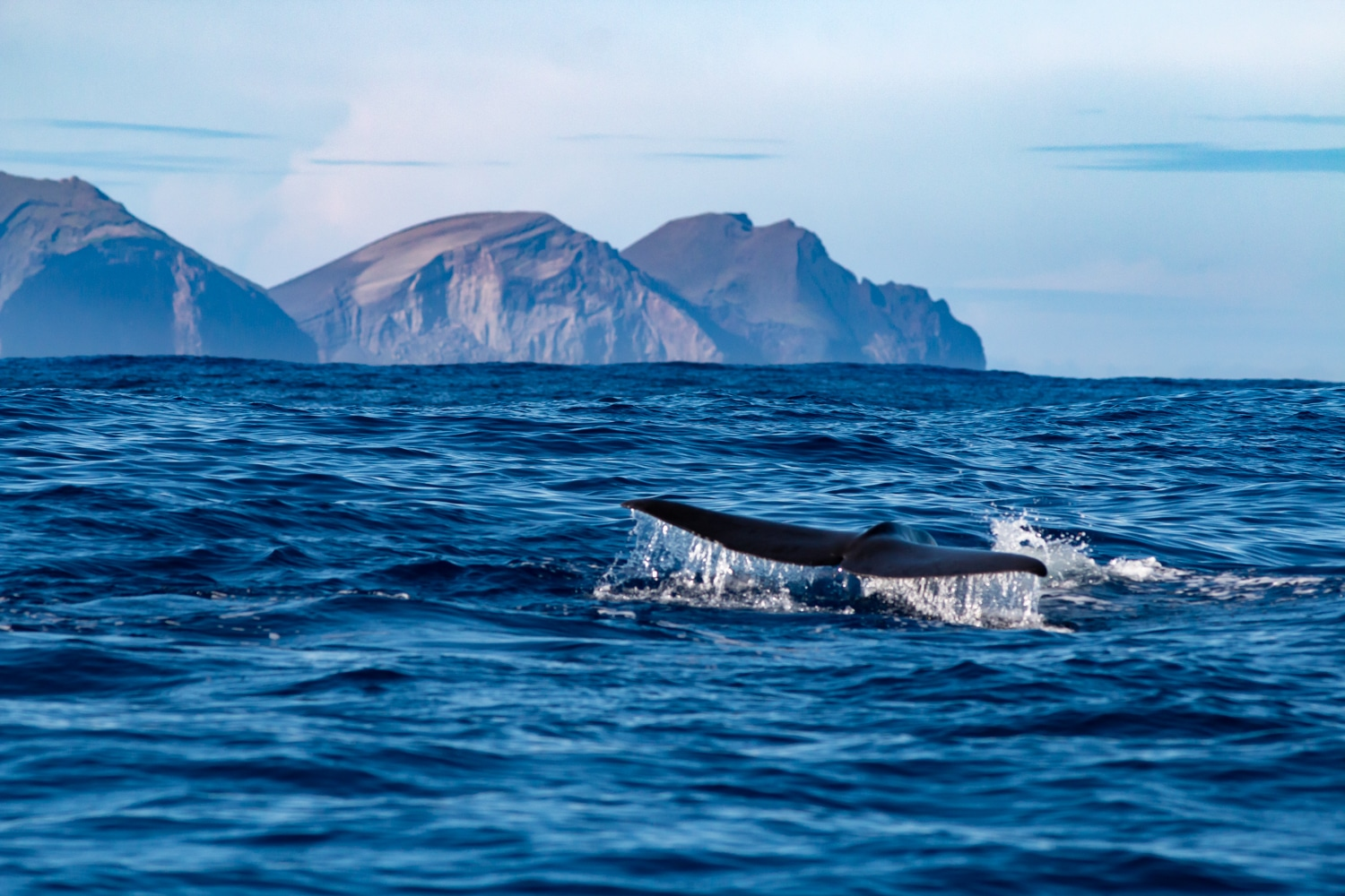 Voyage photo - Le Grand Cachalot des Açores © Wild Seas Explorer